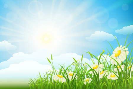 sky sun: Summer meadow landscape with green grass, flowers, sky and sun