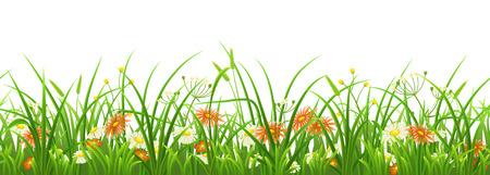 Naadloos groen gras met bloemen op witte achtergrond Stock Illustratie
