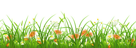 Seamless green grass with flowers on white background
