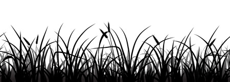 grass silhouette: Seamless grass silhouette on white, vector illustration