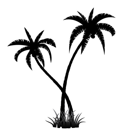 palm tree fruit: Black palm tree silhouette on white background
