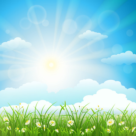 Summer meadow background with green grass, herbs, flowers, sky and sun
