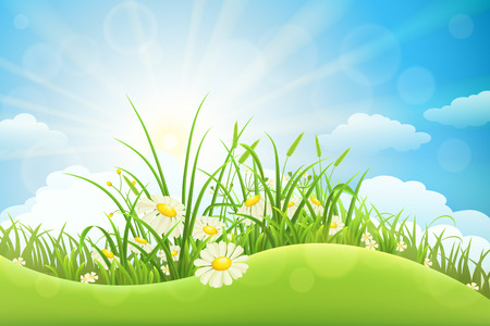 sun flowers: Summer meadow background with green grass, flowers, hill and sun Illustration