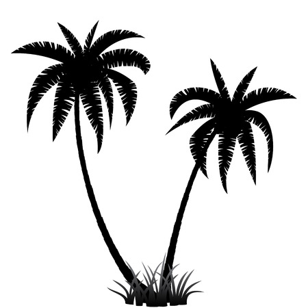 Palm trees silhouette on white background, vector illustration 矢量图像