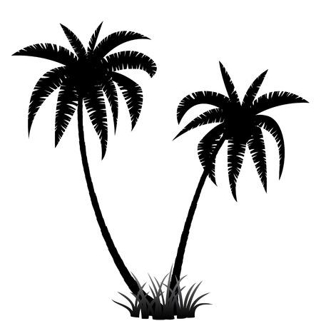 arboles blanco y negro: Silueta de las palmeras en el fondo blanco, ilustración vectorial