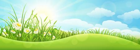 grass flowers: Green summer landscape with grass, flowers, hills and sun