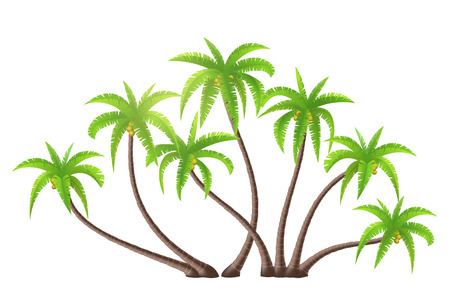 grove: Coconut palm trees isolated on white, vector illustration