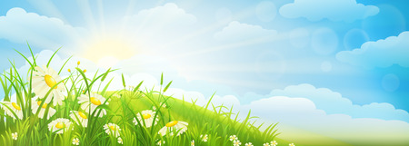 sky sun: Summer meadow background  with green grass, daisies, sky and sun