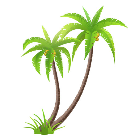 Coconut palm trees isolated on white, vector illustration