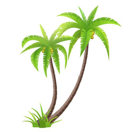 coco: Palmeras del coco aislados en blanco, ilustración vectorial