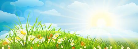 Zomer weide achtergrond met gras, bloemen, hemel en zon
