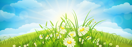 panoramic nature: Green summer meadow with grass, flowers, sky and sun