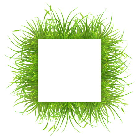 tuft: Square frame with green grass on white background