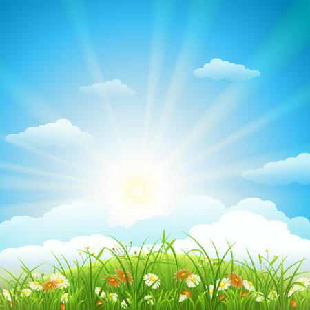 cielo con nubes: Prado del verano con la hierba verde, flores, el cielo y el sol