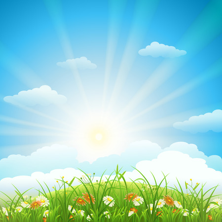 Summer meadow with green grass, flowers, sky and sun