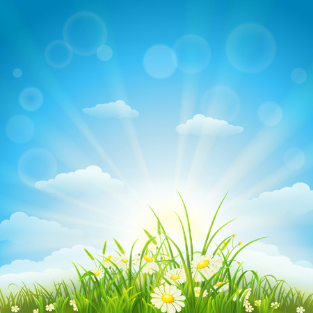 sun flowers: Summer background with green grass, flowers, sky and sun Illustration