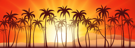tropical sunset: Tropical sunset with palm trees, vector background