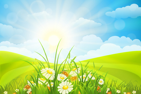 Summer background  with flowers, grass, field, sky and sun Vettoriali
