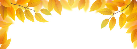 yellow: Autumn branches with leaves frame isolated on white