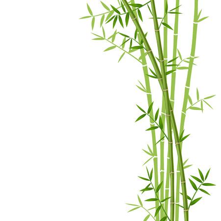 bambu: Bambú verde sobre fondo blanco, ilustración vectorial