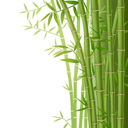 bambu: Bambú verde tallos con hojas sobre fondo blanco