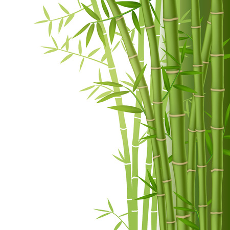Green bamboo stems with leaves on white background Çizim