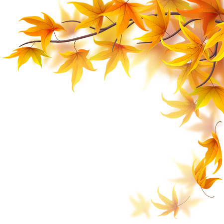 Autumn branch with maple leaves on white background