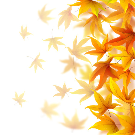 Autumn maple leaves falling on white background, vector illustration