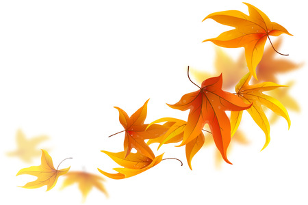 Autumn maple leaves falling and spinning on white background