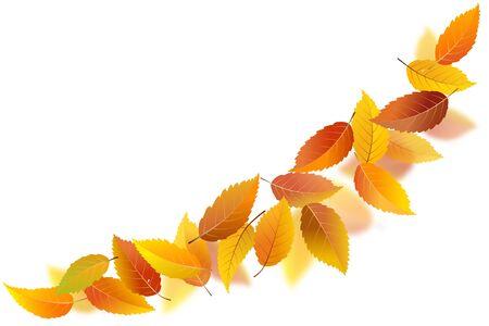 Falling autumn leaves on white background, vector illustration