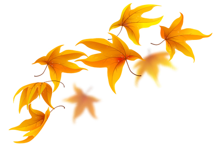 Falling autumn maple leaves on white background, vector illustration Vettoriali