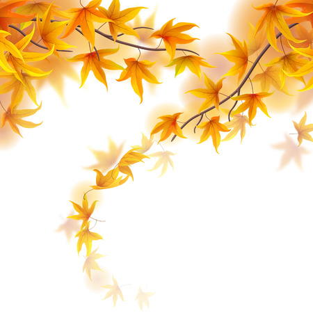 fronds: Autumn fronds with falling maple leaves on white background Illustration