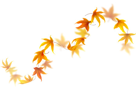 spinning: Curve of falling and spinning autumn maple leaves isolated on white