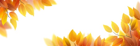 orange trees: Vector banner with autumn leaves