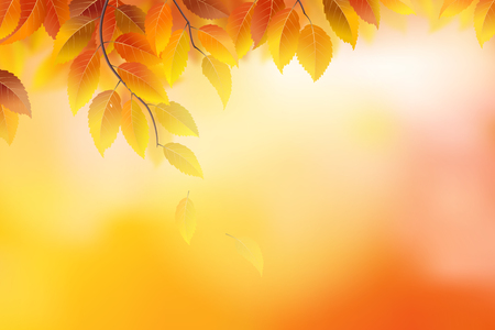 beauty of nature: Autumn background with branches and leaves