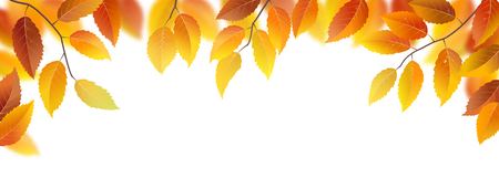branches with leaves: Autumn branches with leaves on white background