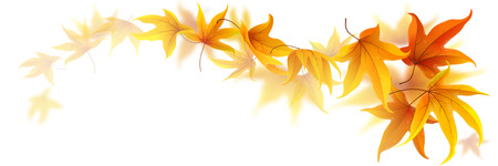 Swirl of falling autumn maple leaves isolated on white Vectores