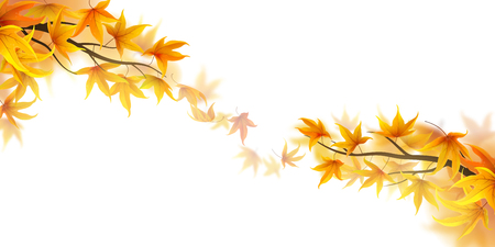 fronds: Autumn branches with falling maple leaves on white background Illustration
