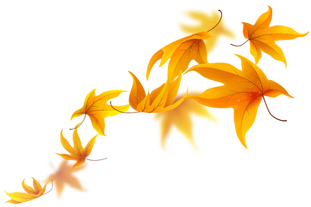 spinning: Autumn maple leaves falling and spinning isolated on white