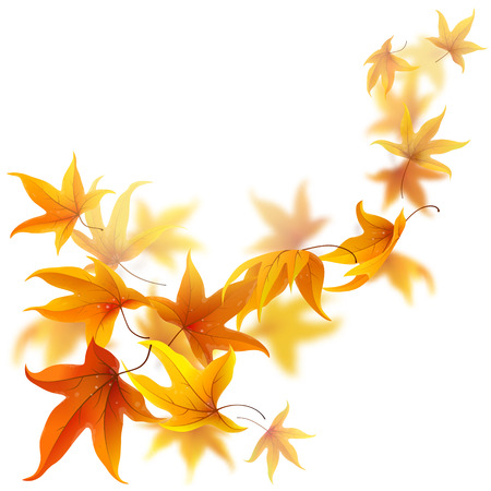 leaves falling: Autumn maple leaves falling and spinning isolated on white background Illustration