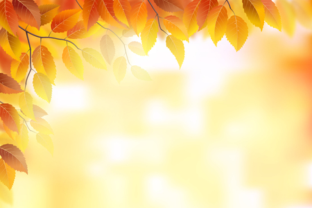 fall trees: Autumn background with fronds and leaves Illustration