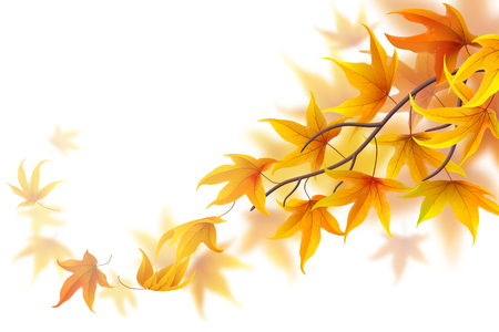 fronds: Autumn branch with falling maple leaves on white background Illustration