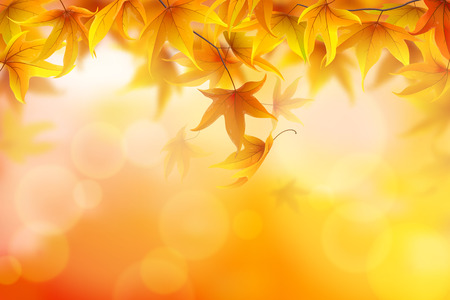 Autumn background with fronds and maple leaves