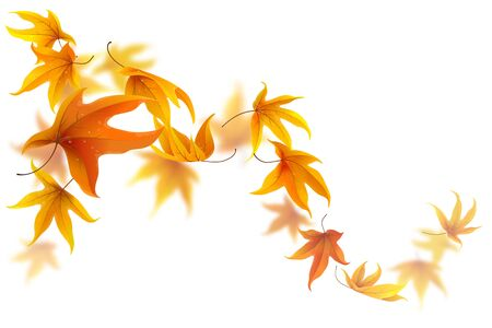 leaves falling: Autumn maple leaves falling and spinning on white background Illustration