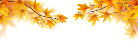 frond: Autumn branches with maple leaves on white background