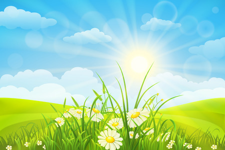 Nature meadow background  with flowers, grass, sky and sun