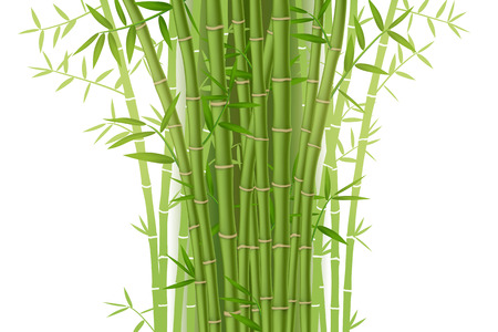 Green bamboo bush isolated on white background