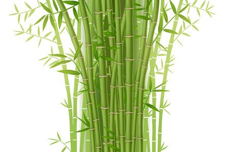Groene bamboe struik op een witte achtergrond Stock Illustratie