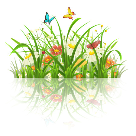 grass flowers: Spring grass, flowers and butterflies with reflection on white