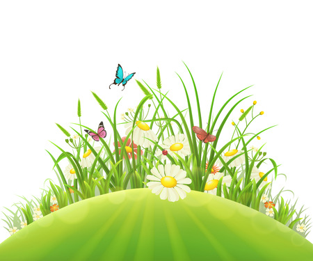 Spring summer hill with green grass, flowers and butterflies